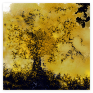 First image of 'Tree of Life' - Remarkable art print inspired by the golden colors of nature in autumn in Occitanie, France. artist: Anne Turlais - Limited edition of 300. Signed Prints on Dibond.