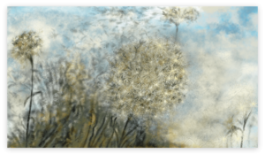 First image of 'Asteraceae' - The last trembling leaves of autumn cling to the tops of the poplars, forming a lovely feathery envelope. artist: Anne Turlais - Limited edition of 300. Flower Art Print on Dibond.